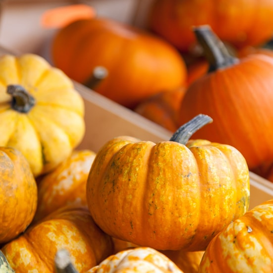 9 Uses for Mini Pumpkins - Pumpkins are everybody's favorite! They just scream Fall! Check out these 9 Uses for Mini Pumpkins to squeeze even more pumpkin into your life while the season lasts! Love decorating for Fall and mini pumpkins are so fun! Love these ideas